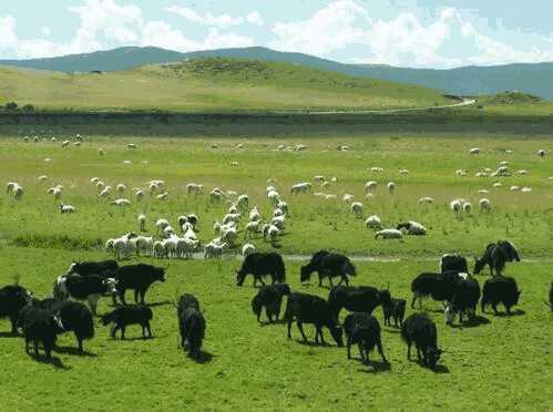 <b>「通过手机日赚200」农牧业开发 乌苏古尔图农牧</b>
