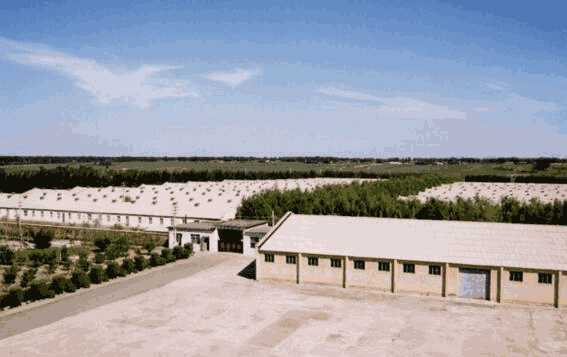 <b>「电商怎么做」农牧业开发|新疆乌苏古尔图农牧</b>